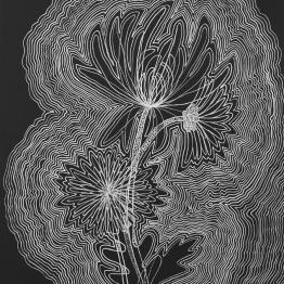 """Chrysanthemum,"" Silver Sharpie paint pen on black paper, 22"" x 30"""